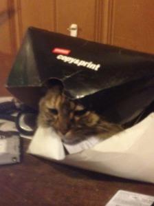 caty (1)